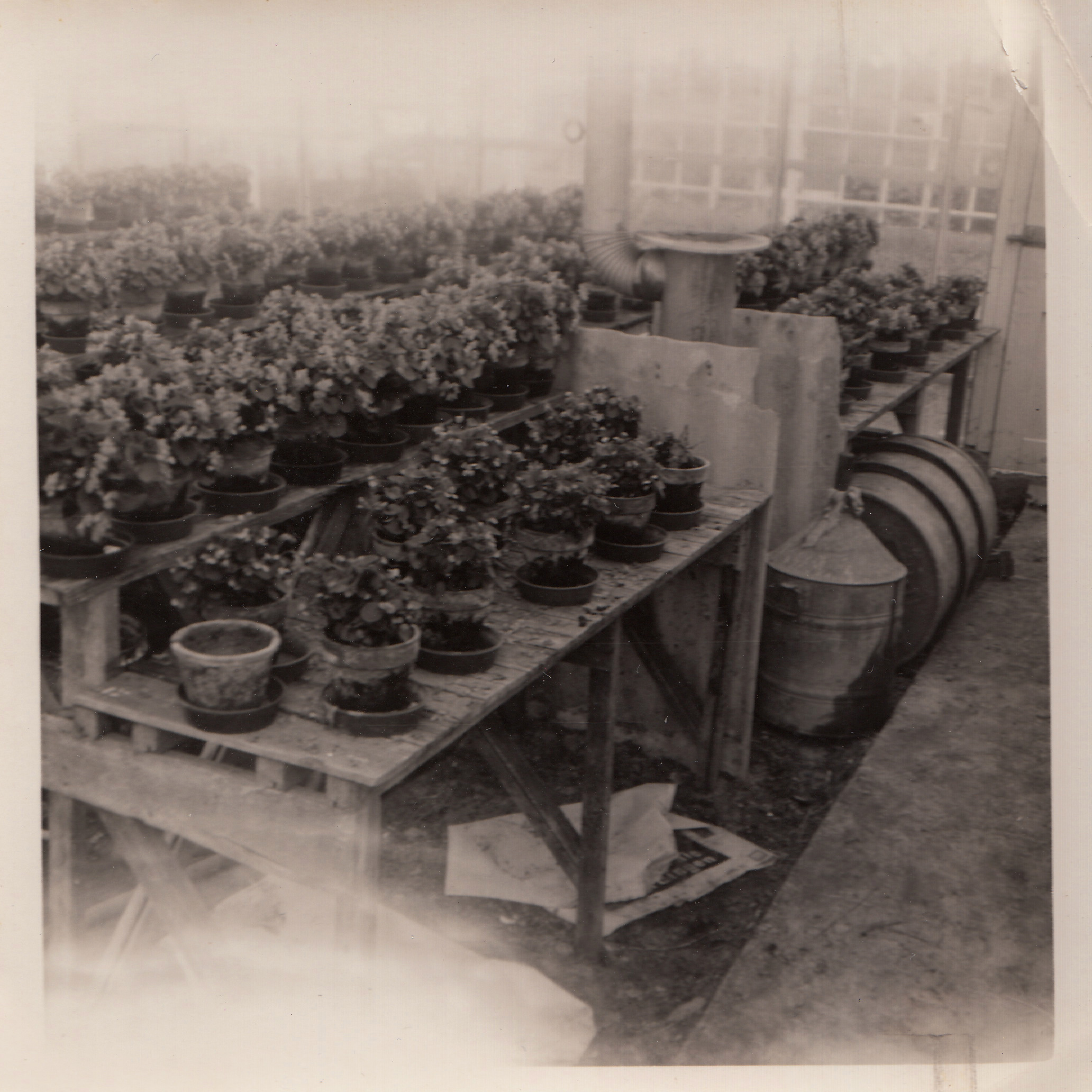 seedcare history