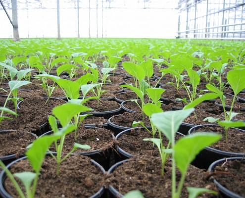 seedcare
